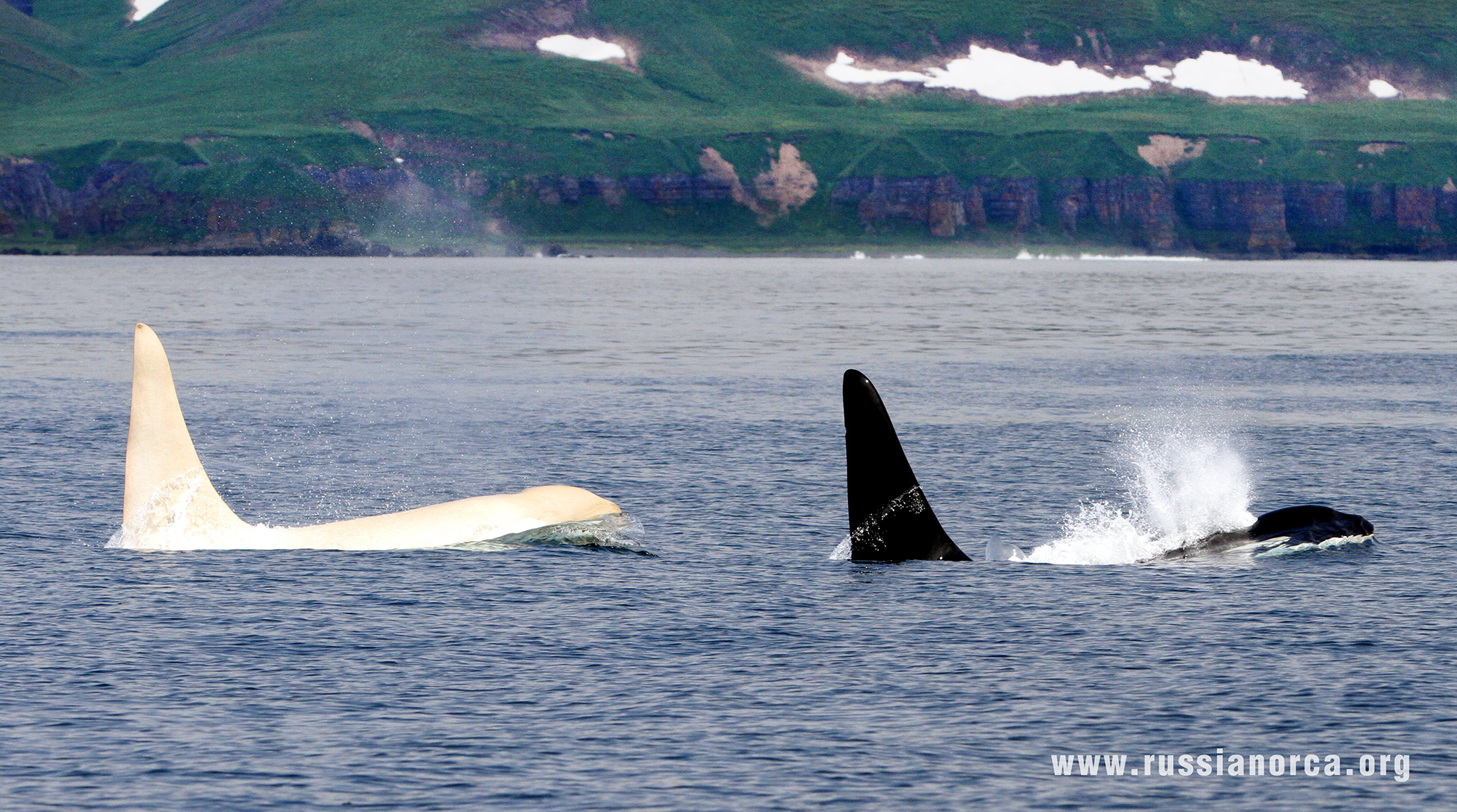 arch russian whale - photo #14
