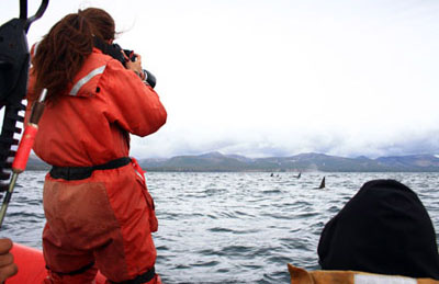 Working with orcas